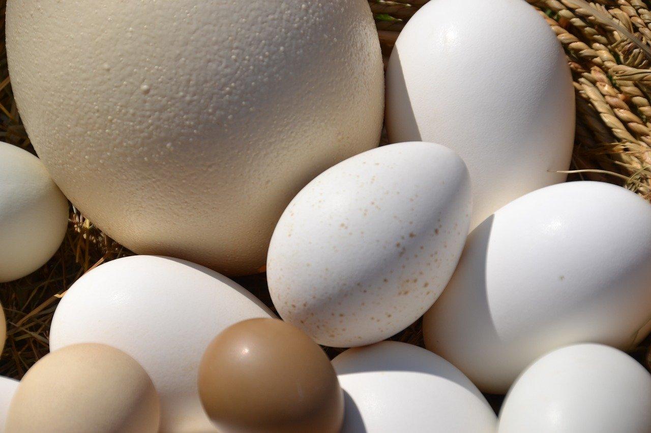 Egg Basket Ostrich Egg Goose Egg  - Innviertlerin / Pixabay