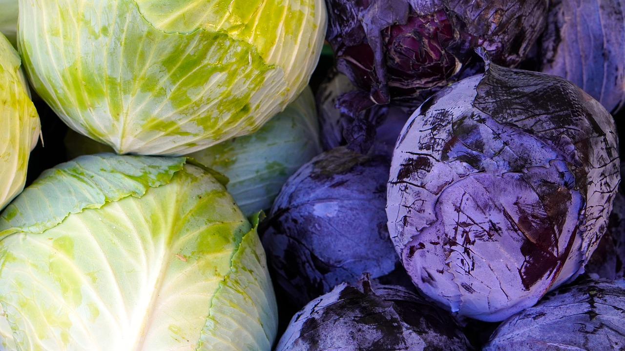 Kohl Red Cabbage White Cabbage  - matthiasboeckel / Pixabay